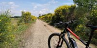 Bardena Visit and Tarazonica Greenway Route